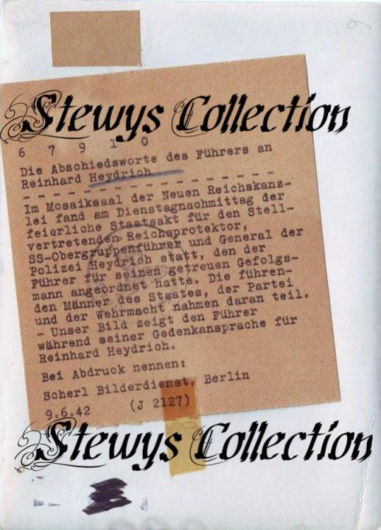 Stewy_11.jpg