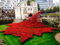WWI Poppy Remembrance, Tower of London