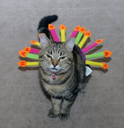 Kitty Tale