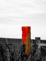 Orange Post In Flambough