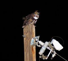 Owl On night watch