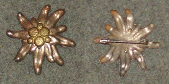 Edelweiss (1).JPG