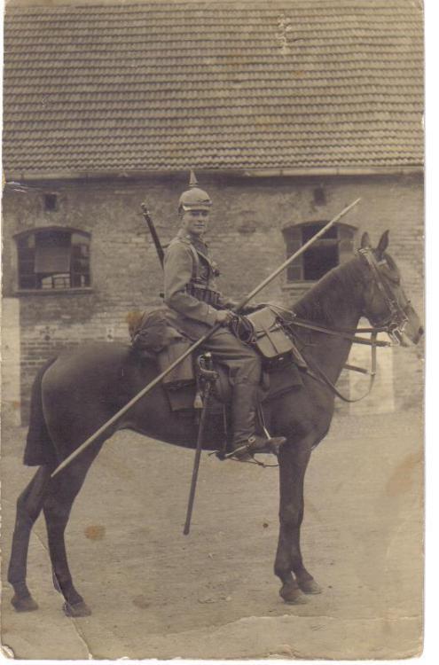 apale horse.jpg